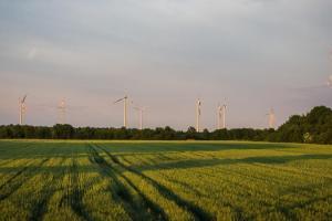 Агропрогноз: особливості впливу вітру на майбутній урожай