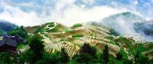 Rice Terraces System in Southern Mountainous and Hilly AreasLongsheng Longji Terraces, China