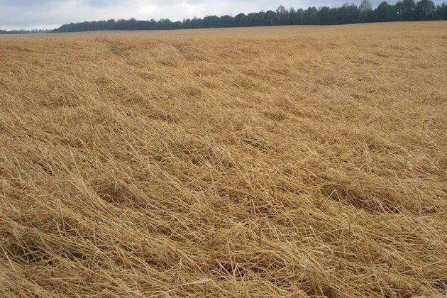 Стихія на Західній Україні знищила врожай