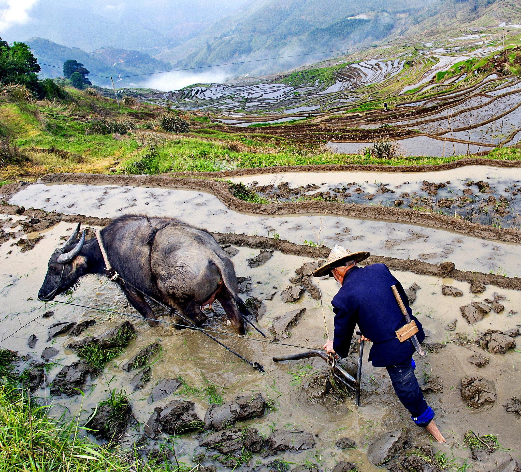 Rice Terraces System in Southern Mountainous and Hilly Areas, Youxi Lianhe Terraces, China