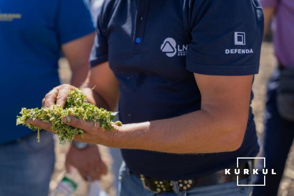 Кукурудза на силос від А до Я: усе про гібриди та технологію фото 13 LNZ Group