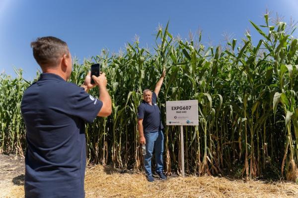 Кукурудза на силос від А до Я: усе про гібриди та технологію фото 9 LNZ Group