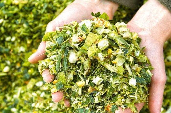 Як вибрати силосний гібрид кукурудзи та гербіцидний захист— приклад ФГ «Тетяна 2011» фото 1 LNZ Group