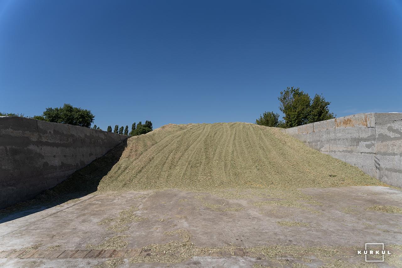 Кукурудза на силос від А до Я: усе про гібриди та технологію фото 11 LNZ Group