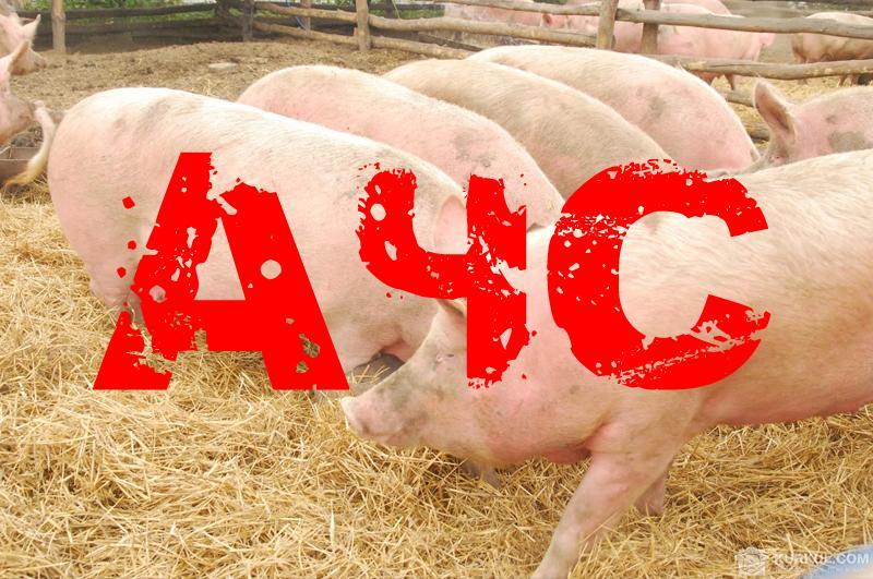 Недопущення АЧС: Держпродспоживслужба закликає фермерів бути обачними