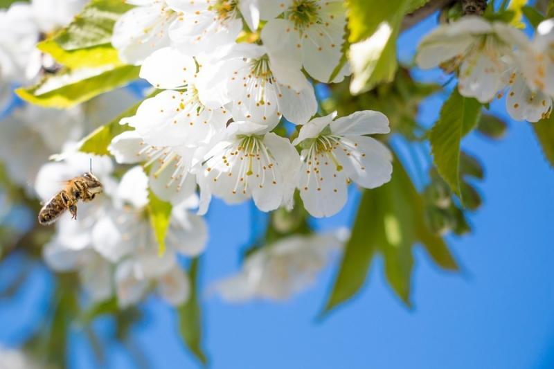 Бджоли краще переносять стабільні морози, ніж перепади температур