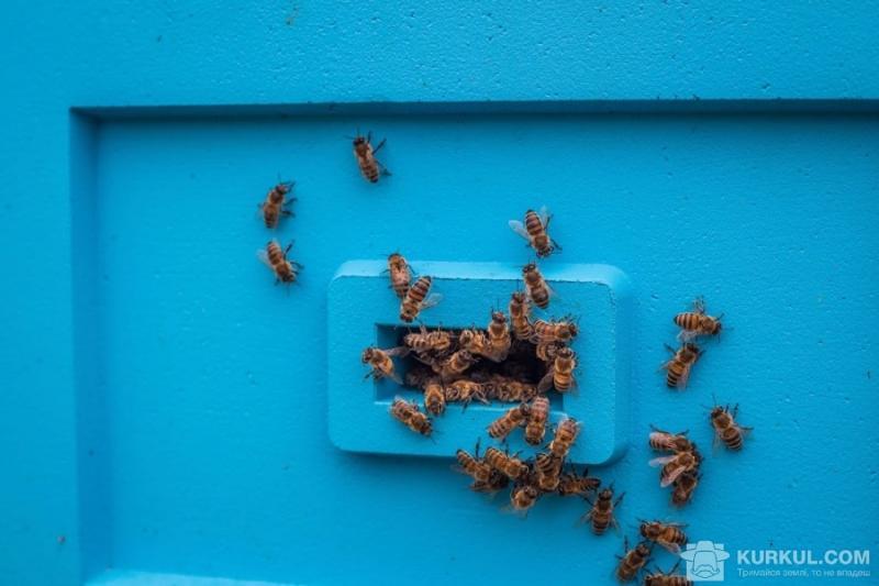 В ЄС зосередяться на виробництві власного меду