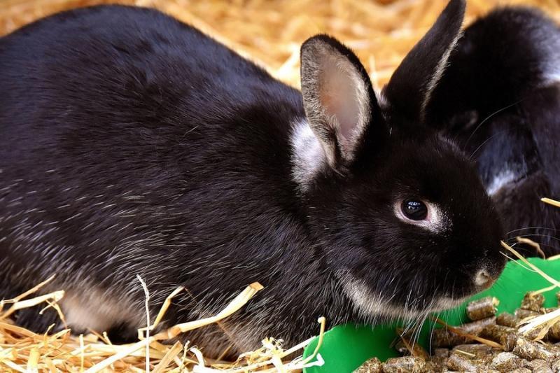 Станом на 1 січня 2018 р. нараховувалося 149,9 тис. голів кролів