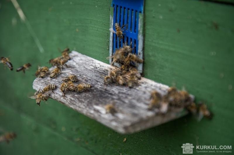 Зловмисники викрали 10 бджолосімей
