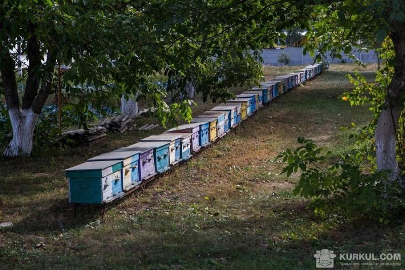 Щорічно на Житомирщині виробляється понад 8 тис. т меду