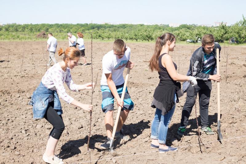 Студенти університету садівництва заклали дослідний сад