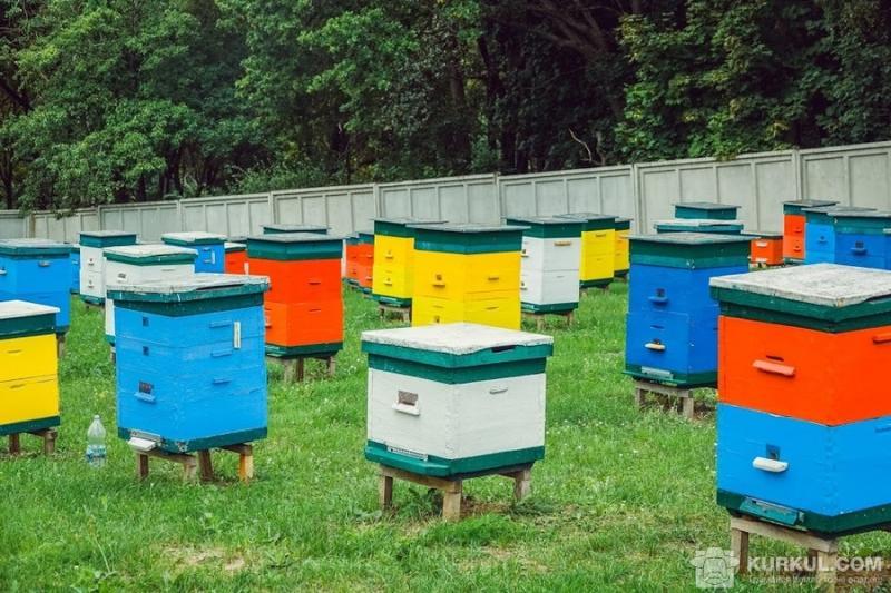 Пасічник з Кіровоградщини помер після загибелі бджіл