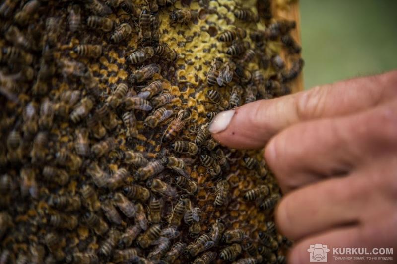 Американець вижив після укусів тисячі бджіл