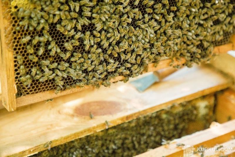 Хімікати винні у загибелі 53% бджіл — Держпродспоживслужба