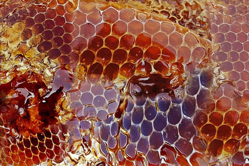 Італійські бджолярі вимагають заборонити китайський мед