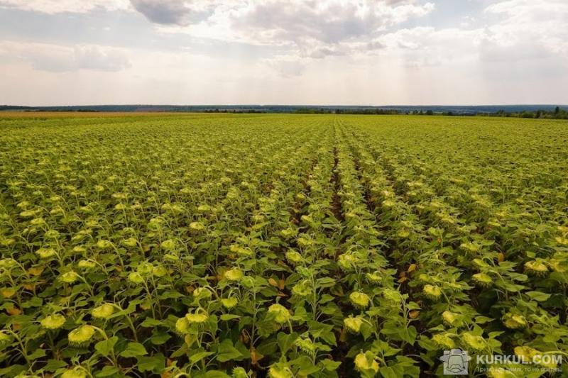 Діти постраждали від агрохімії на Тернопільщині