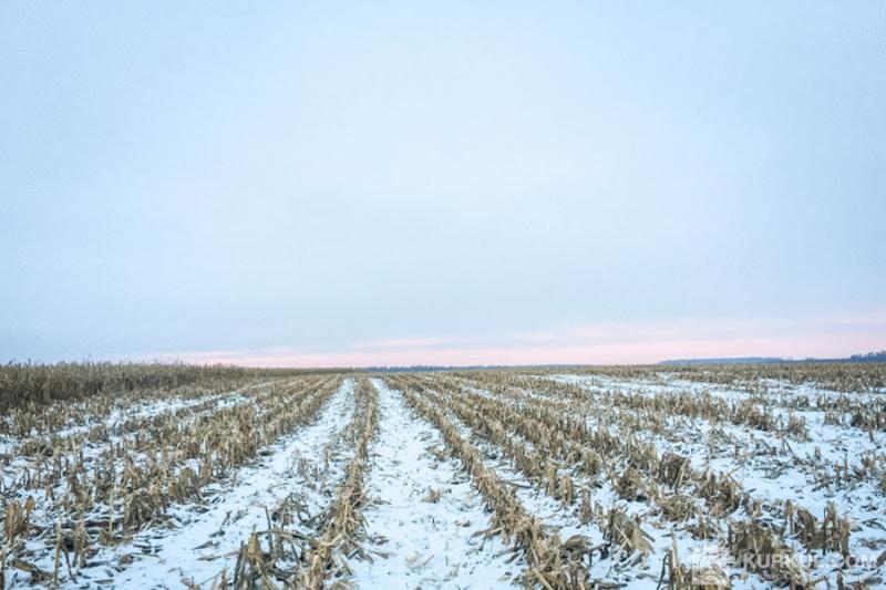 Днями в Україні прогнозують мокрий сніг