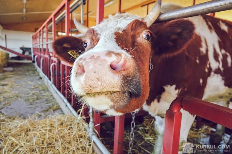 В Україні почав діяти новий стандарт якості молока