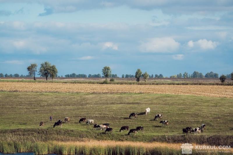 Площа під кормовими культурами в Україні скоротилася на 85% — Гадзало