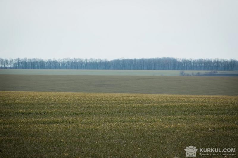 Земельний конфлікт на Буковині закінчився смертю директора кооперативу