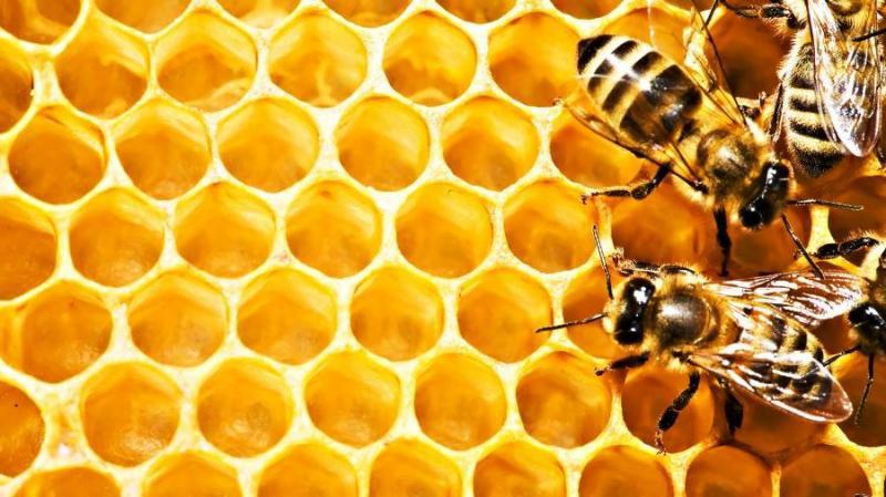 На Київщині загинуло близько 200 бджолосімей