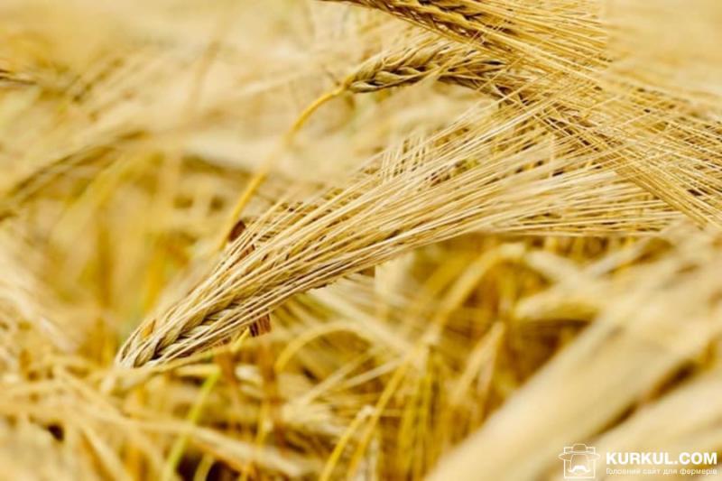 На Херсонщині зібрали перший врожай ячменю
