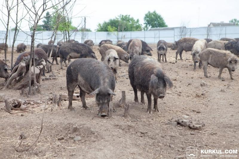 На Черкащині виявили два незаконних скотомогильника