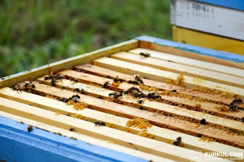У Польщі дотації на бджолосім'ю перевищують €1 тисячу