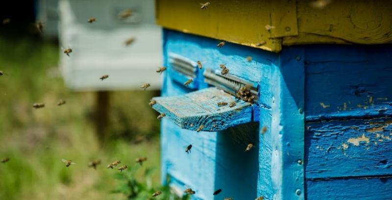 Спілка пасічників звернулась до Кабміну з вимогами захистити бджіл