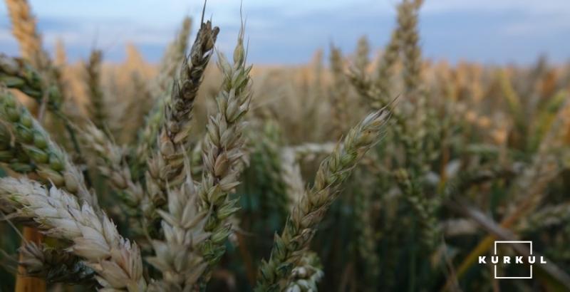 Експерти розповіли, як кількість фунгіцидних обробок впливає на врожай ярої пшениці фото 1 LNZ Group
