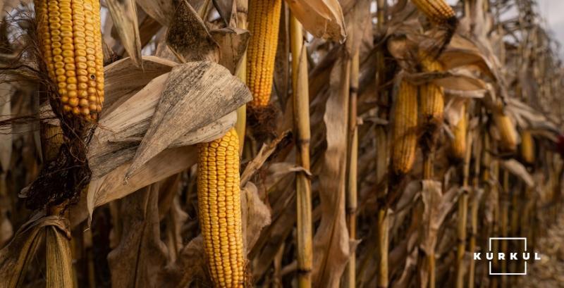 На Черкащині судитимуть фермера, який намагався викрасти чужий врожай кукурудзи