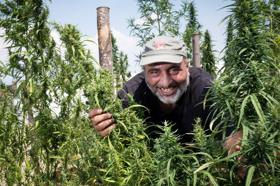 Поля конопли скосили хранение марихуаны рб