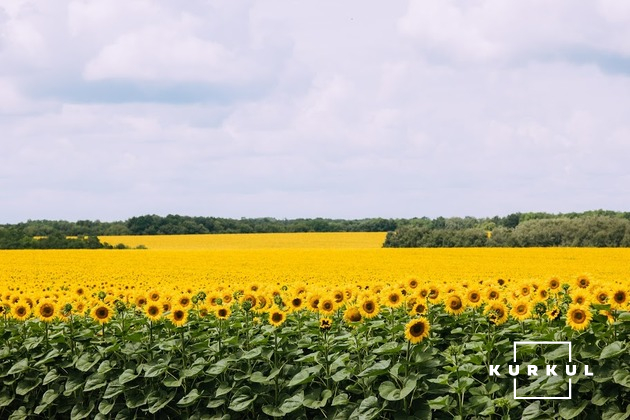 Поле соняшнику