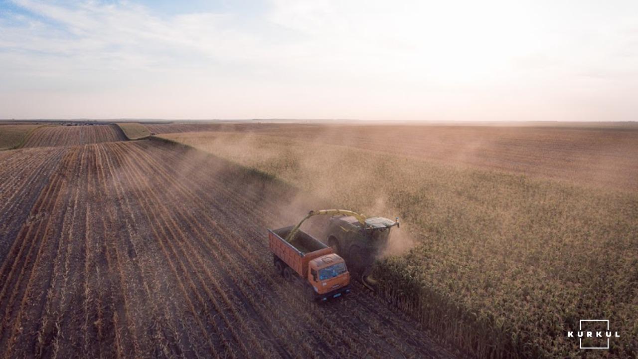 Збір кукурудзи на силос