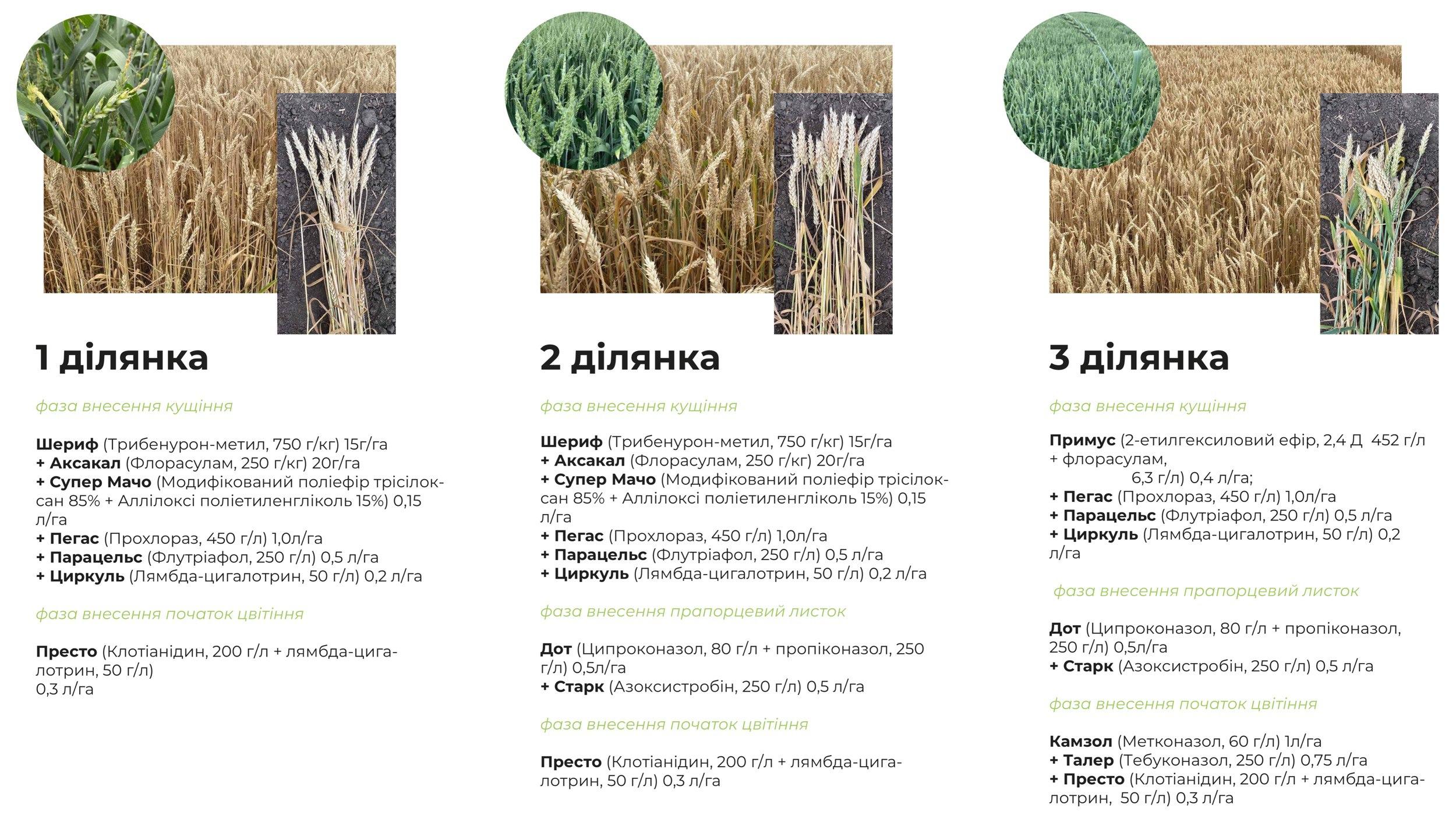 Експерти розповіли, як кількість фунгіцидних обробок впливає на врожай ярої пшениці фото 2 LNZ Group