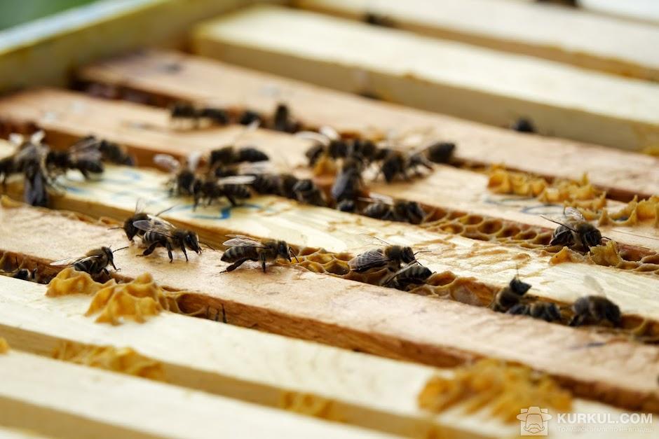 Бджоли у вулику