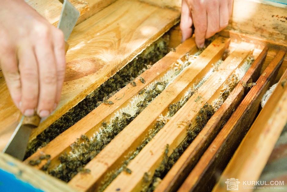 Огляд гнізда бджолиної сім'ї