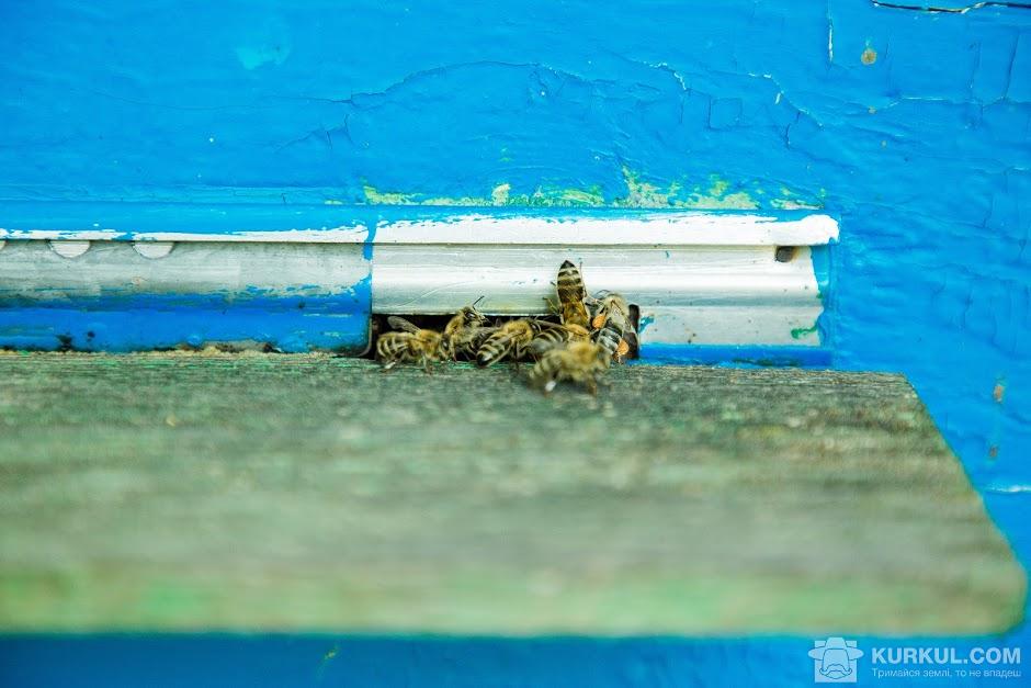 Вулик із бджолами