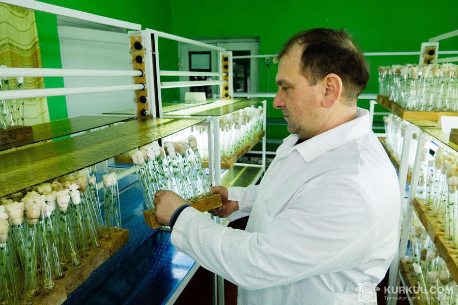 Геннадій Гайструк , заступник диреткора з наукової частини ПАТ НВО «Чернігівеліткартопля»