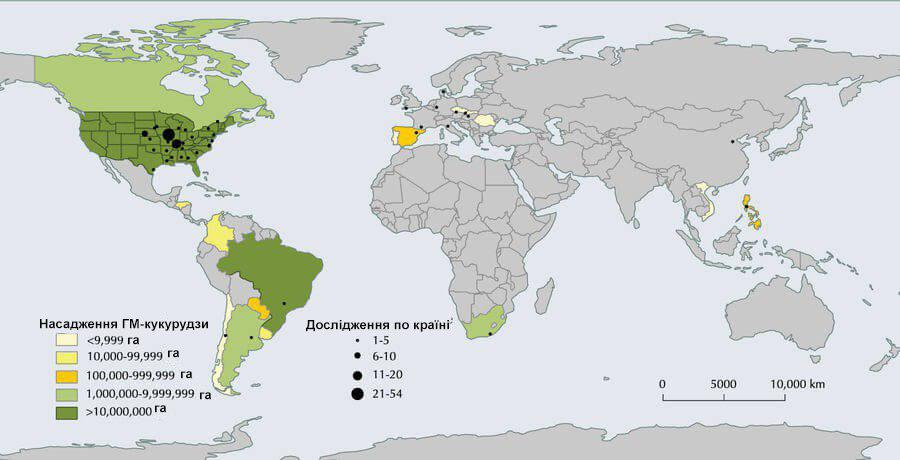 Світове розміщення полів кукурудзи, залучених для мета-аналізу. Території, засаджені ГМ-кукурудзою у 2016 році.
