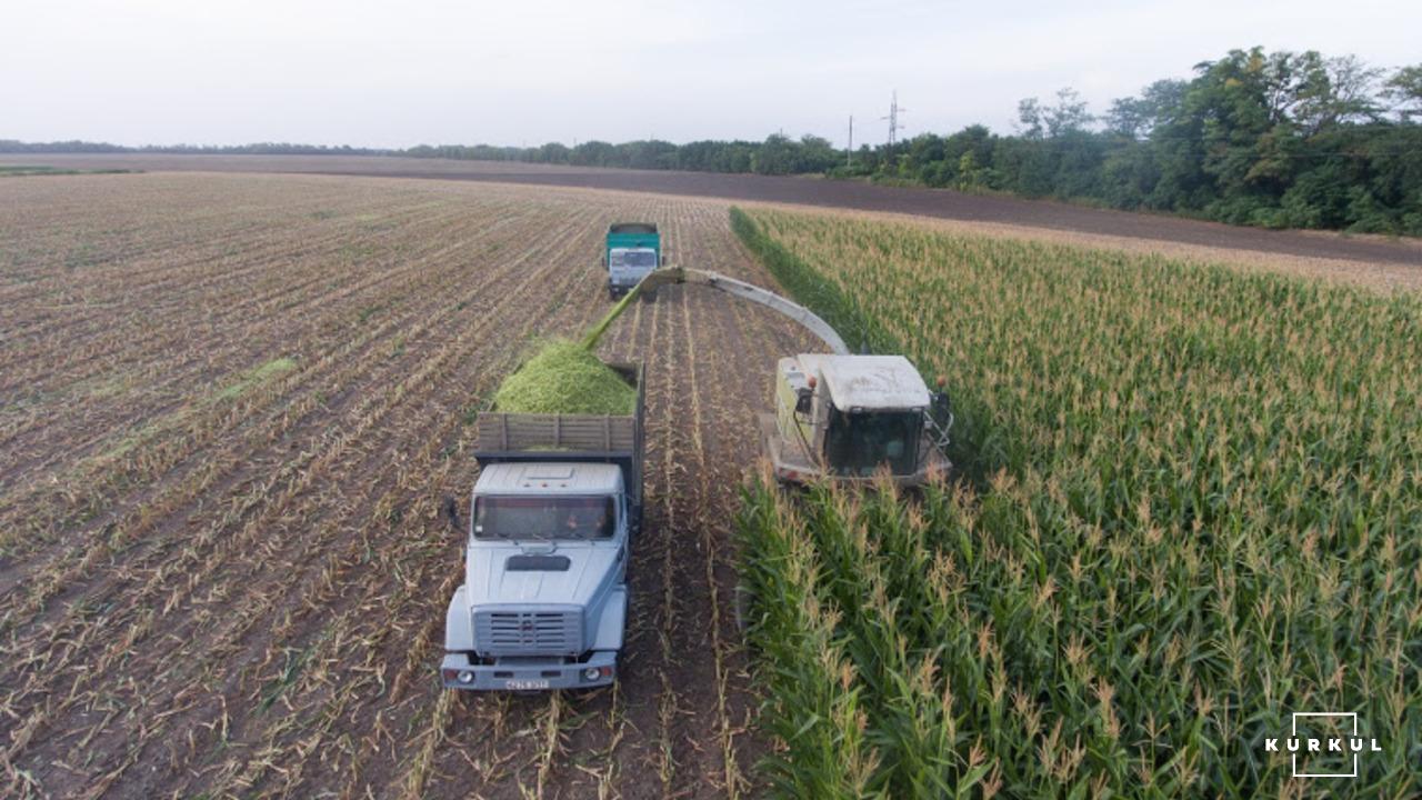 Кукурудза на силос від А до Я: усе про гібриди та технологію фото 10 LNZ Group