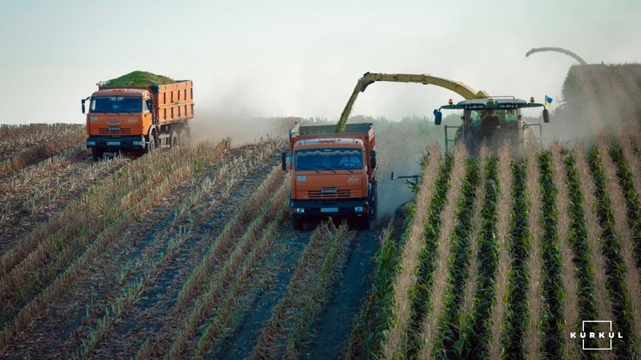 Кукурудза на силос від А до Я: усе про гібриди та технологію фото 17 LNZ Group
