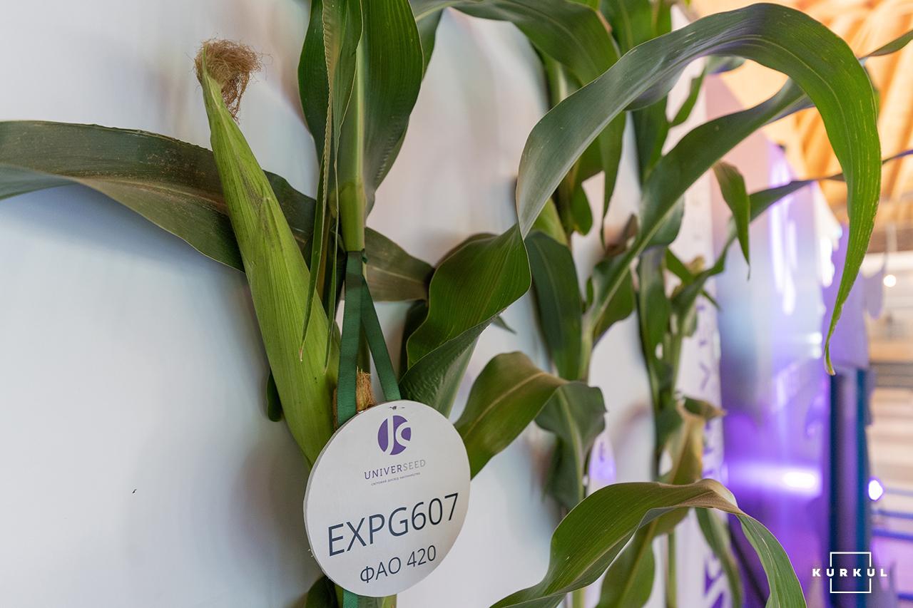 Кукурудза на силос від А до Я: усе про гібриди та технологію фото 4 LNZ Group