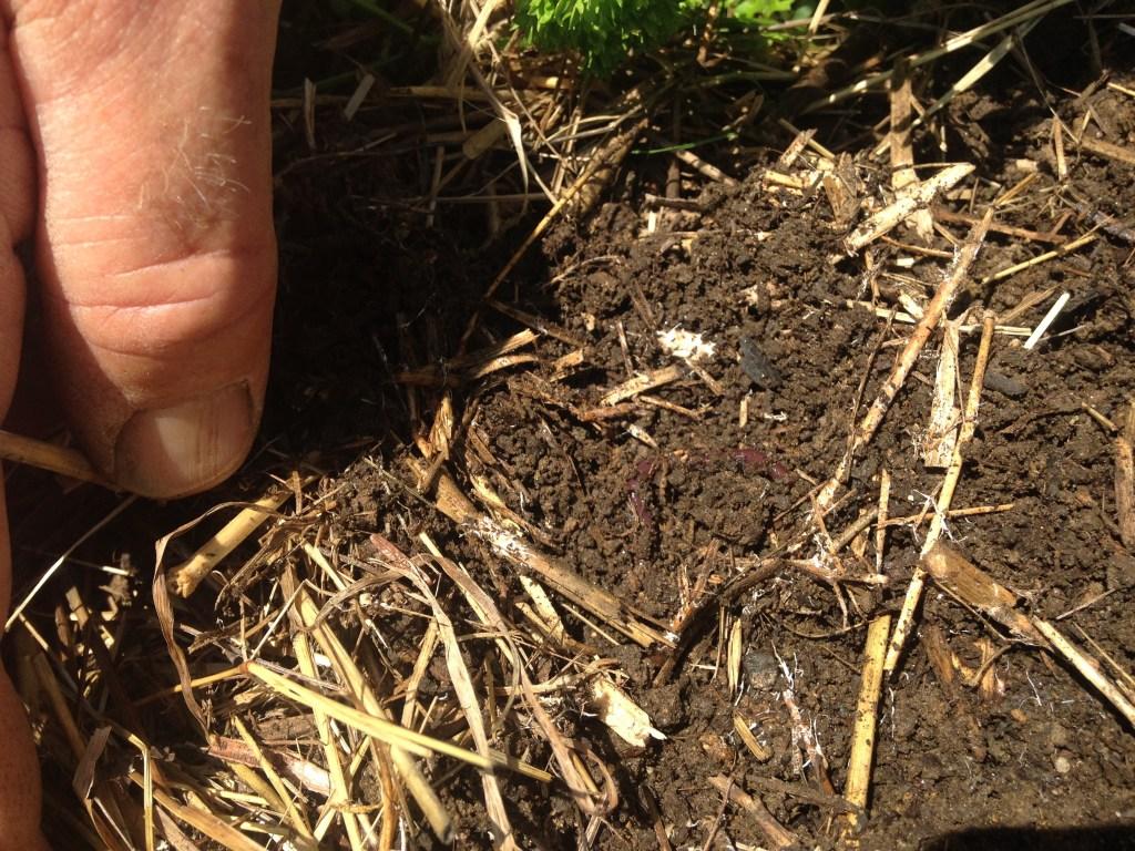Здоровий ґрунт, наповнений активними мікроорганізмами
