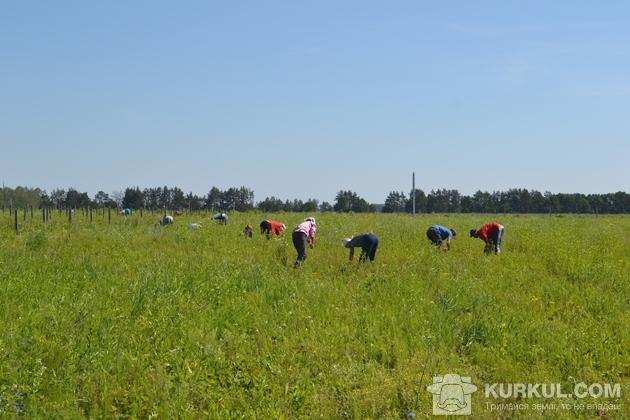 Робітники в полі