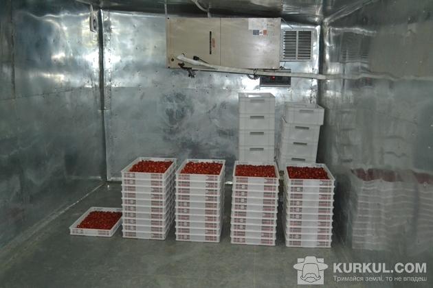 Холодильник для охолодження ягід у господарстві