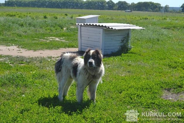Територію господарства охороняють собаки