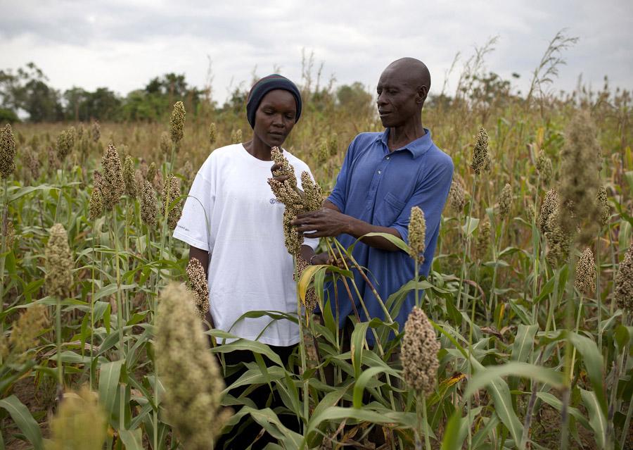 Кенійські фермери