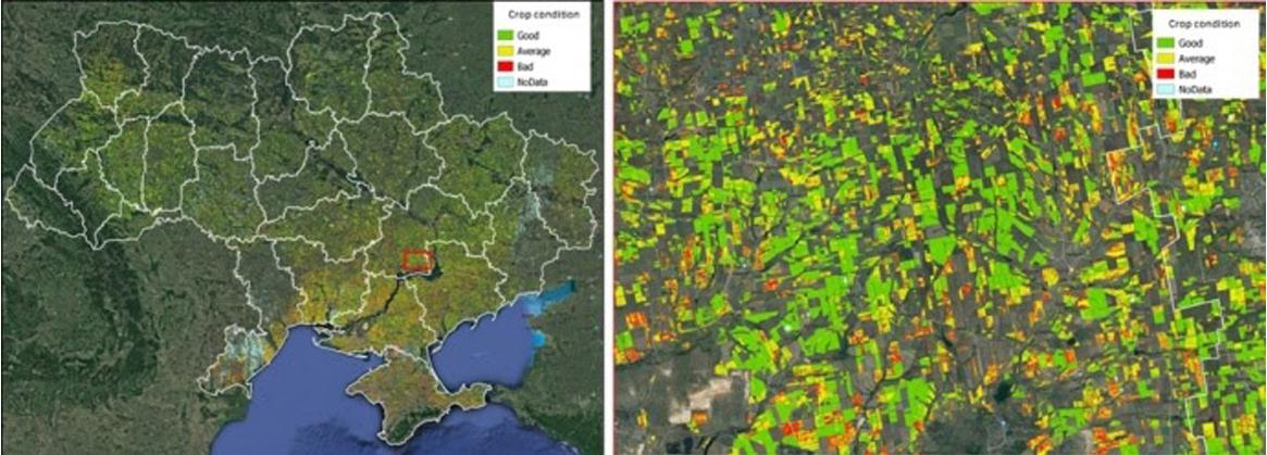 Стан посівів озимих культур в регіонах України.