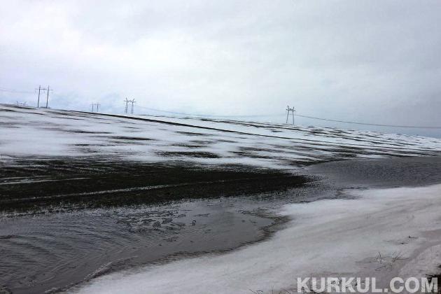 Поле озимої пшениці на Сумщині (14 лютого 2016 р.)